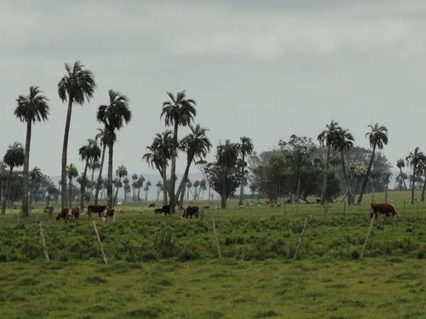 pampa-la-rocha-uruguay