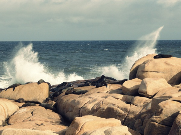 sea-lions-cabo-polonio-uruguay