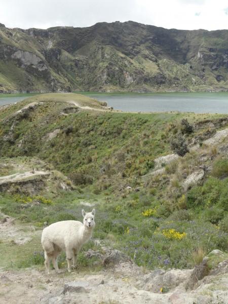 llama-quilotoa