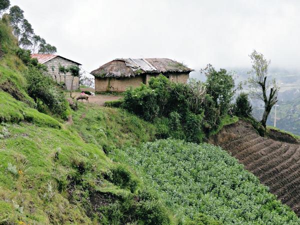 Farm-Chugchilan-Ecuador