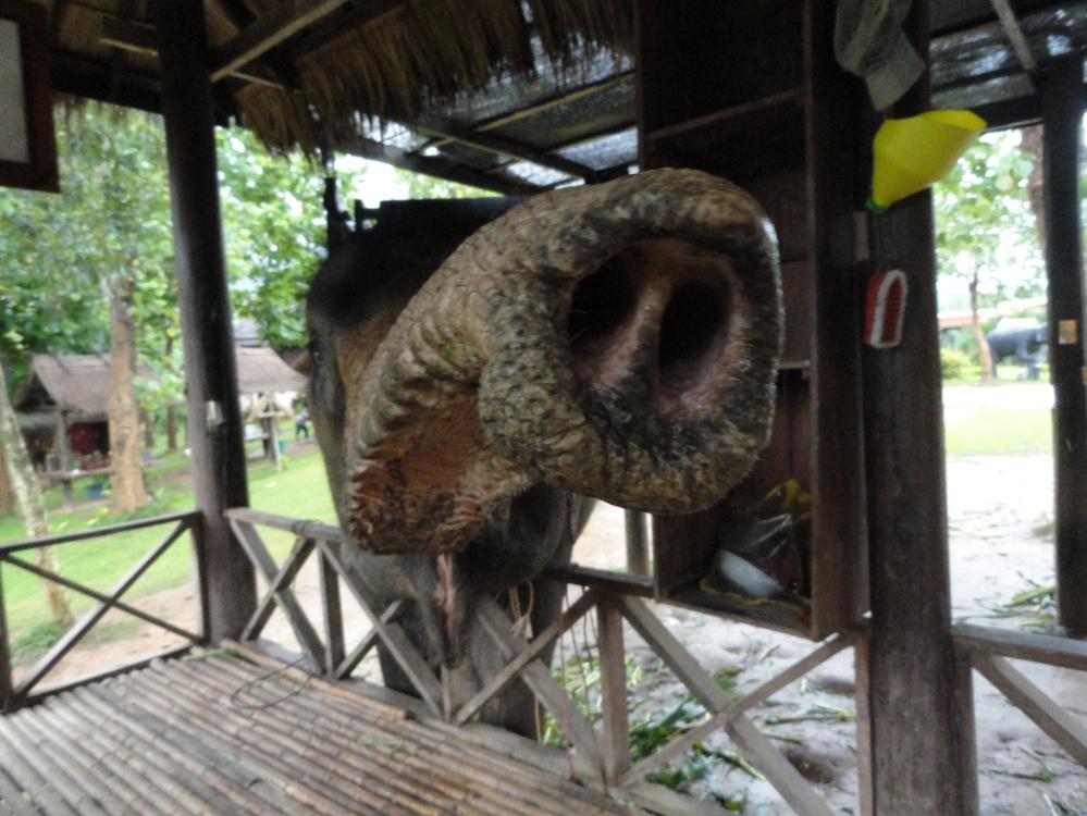 elephant-luang-prabang-laos